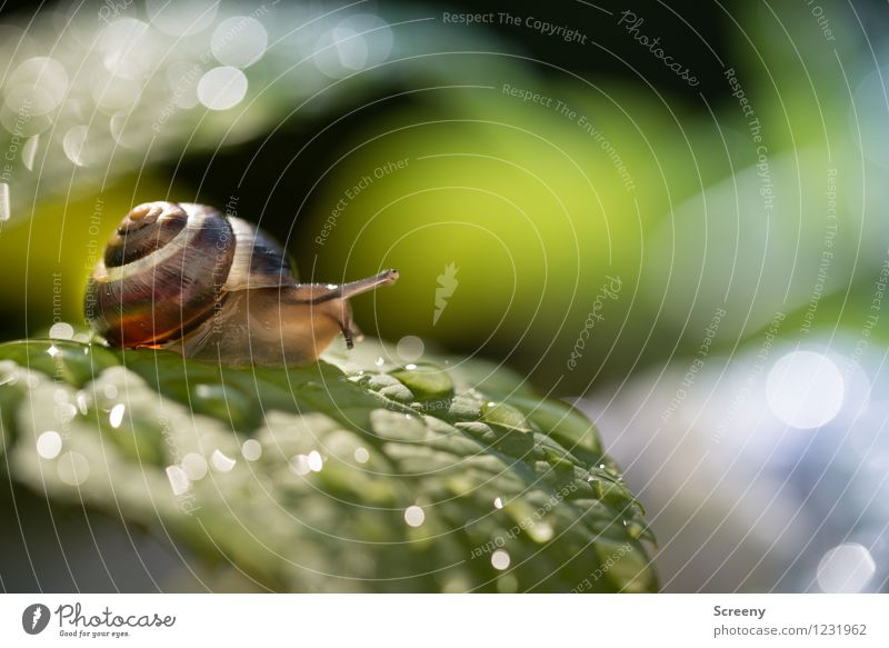 Bei Nässe Rutschgefahr Natur Pflanze grün Sommer Wasser Landschaft Blatt Tier Frühling klein Garten braun Park Regen Sträucher Wassertropfen