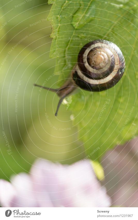 Ganz schön hoch... Natur Pflanze grün Sommer Wasser Blatt Tier Frühling klein Garten braun Park Zufriedenheit Wassertropfen nass Abenteuer