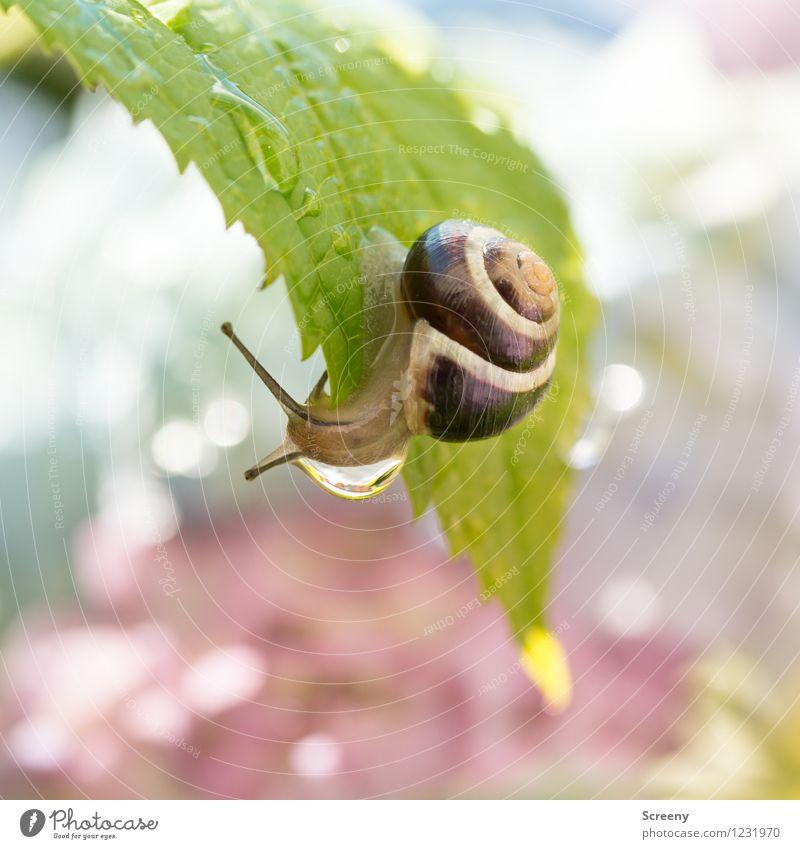 Ich geh mal duschen... Natur Pflanze grün Sommer Wasser Tier Frühling klein Garten braun Park Zufriedenheit Wassertropfen nass Abenteuer nah