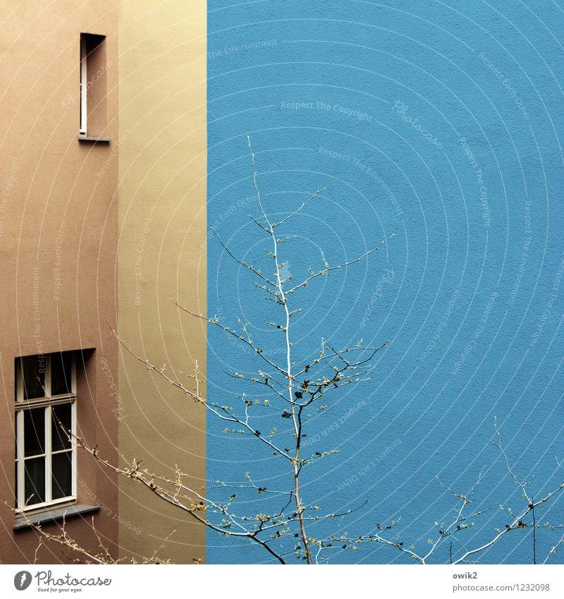 Wohnen im Blauen Baum Haus Gebäude Mauer Wand Fassade Fenster Wachstum einfach blau braun Design Ecke verstecken Farbe Strukturen & Formen Anstrich leuchten