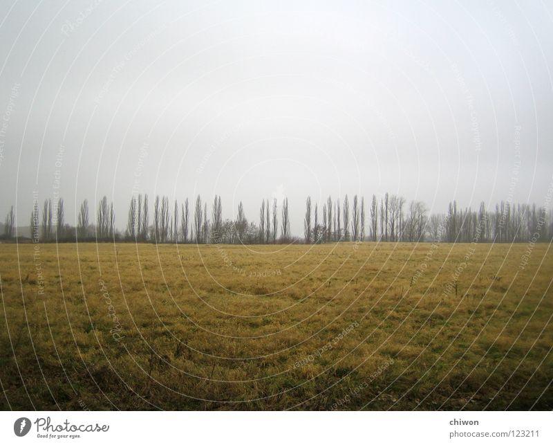 baumwettrennen Baum Wolken Ferne dunkel Wiese grau Traurigkeit Landschaft hell Stimmung Feld Wetter Horizont Erde Trauer Jahreszeiten
