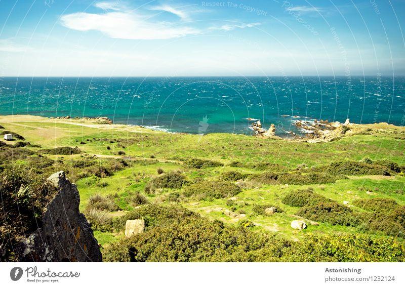 der grüne Strand Umwelt Natur Landschaft Pflanze Wasser Himmel Wolken Horizont Sommer Wetter Schönes Wetter Gras Sträucher Grünpflanze Wiese Felsen Wellen Küste