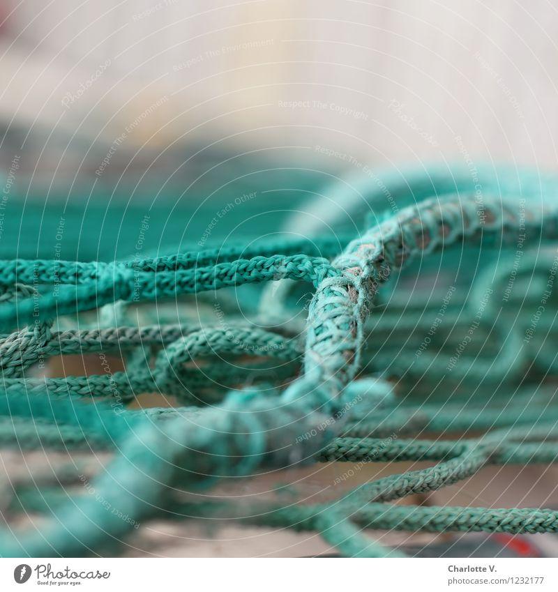 Verstrickungen Kunststoff Linie Netz Netzwerk liegen authentisch maritim grau grün türkis chaotisch Verflechtung Synthese Knoten netzartig Zopfmuster Schnur