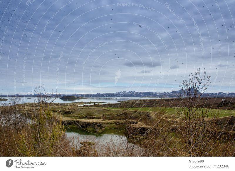 Island 15/2 - Warum der Mückensee Mückensee heißt Umwelt Tapferkeit Mückenschutz Inseketen Plage Seeufer Natur Naturphänomene Berge u. Gebirge Urlaubsfoto