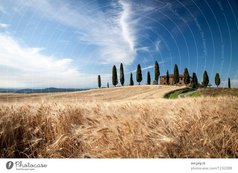 Sichtschutz Ferien & Urlaub & Reisen Tourismus Sommer Sommerurlaub Haus Umwelt Natur Landschaft Himmel Schönes Wetter Zypresse Feld Hügel Italien Toskana