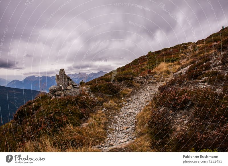 Zum Gipfel Natur Landschaft Pflanze Erde Wolken Gewitterwolken Herbst Wetter schlechtes Wetter Gras Sträucher Wildpflanze Felsen Alpen Berge u. Gebirge Ferne