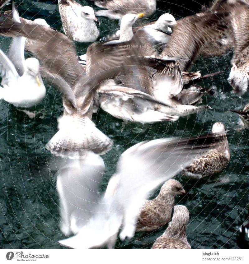 Möwen II Farbfoto Gedeckte Farben Außenaufnahme Menschenleer Vogelperspektive Meer Tier Wasser Tiergruppe Schwarm Geschwindigkeit chaotisch laut Futterneid