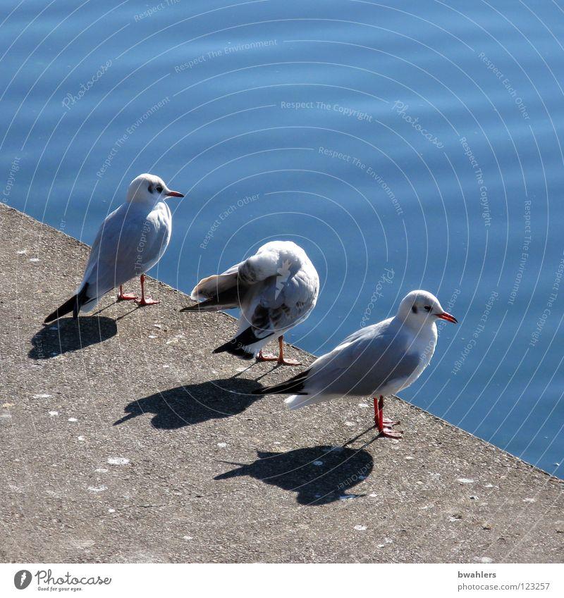 was machen wir jetzt? Möwe weiß Am Rand 3 See ruhig Uferpromenade Wasser Vogel blau Stein Küste Blick Bodensee Schatten