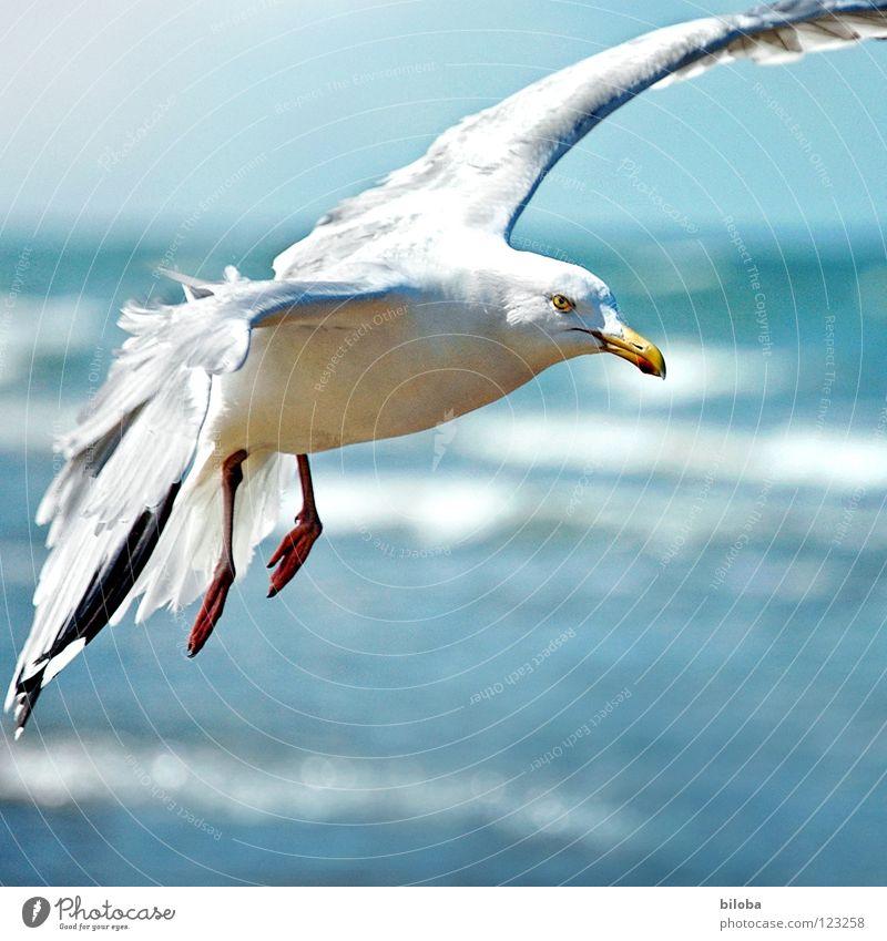 Ich lass einen fliegen! schön Himmel weiß Meer blau Strand schwarz Tier Freiheit Vogel Wellen Küste elegant fliegen frei hoch