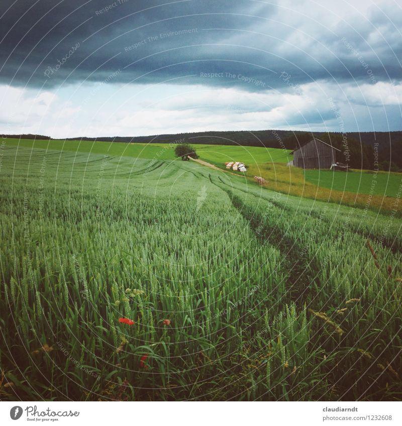 Regenwolken Umwelt Natur Landschaft Pflanze Urelemente Himmel Wolken Gewitterwolken Sommer schlechtes Wetter Unwetter Nutzpflanze Weizenfeld Feld Wald Hügel