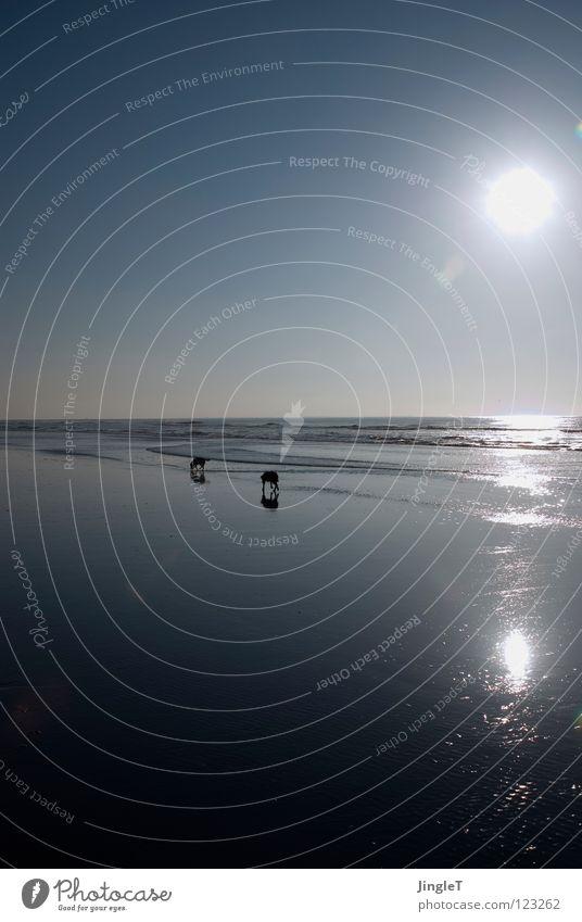 Wochenend und Sonnenschein... Wasser Himmel Meer Freude Strand ruhig schwarz Einsamkeit gelb Ferne Erholung Spielen Hund See Sand