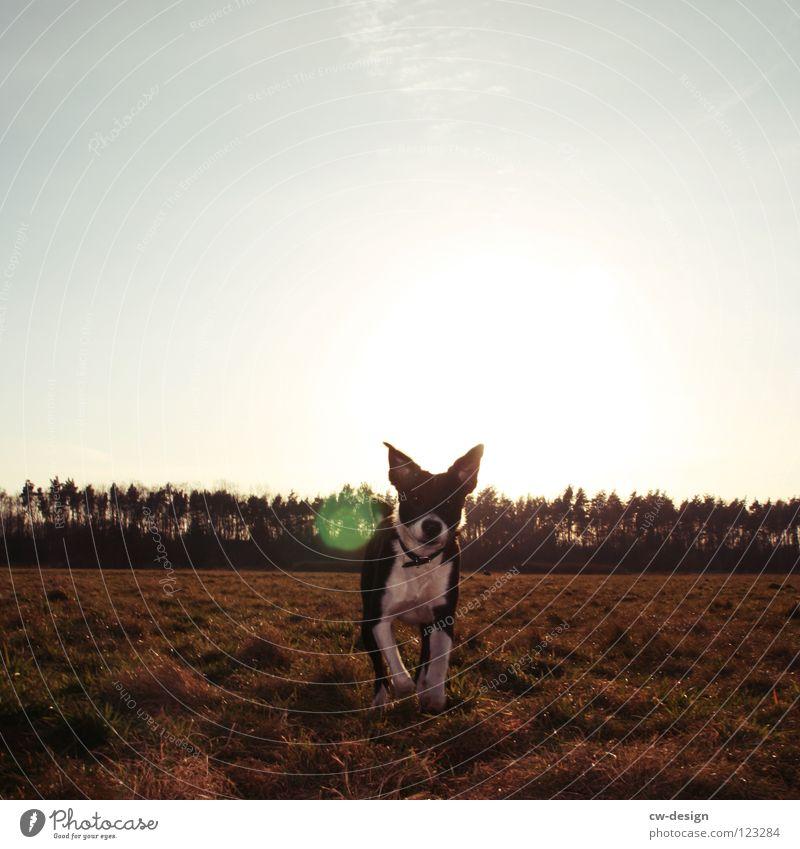 hunde.leben! Natur schön Himmel blau Sommer Freude Winter Einsamkeit Herbst Wiese Spielen Gras Frühling grau Hund braun