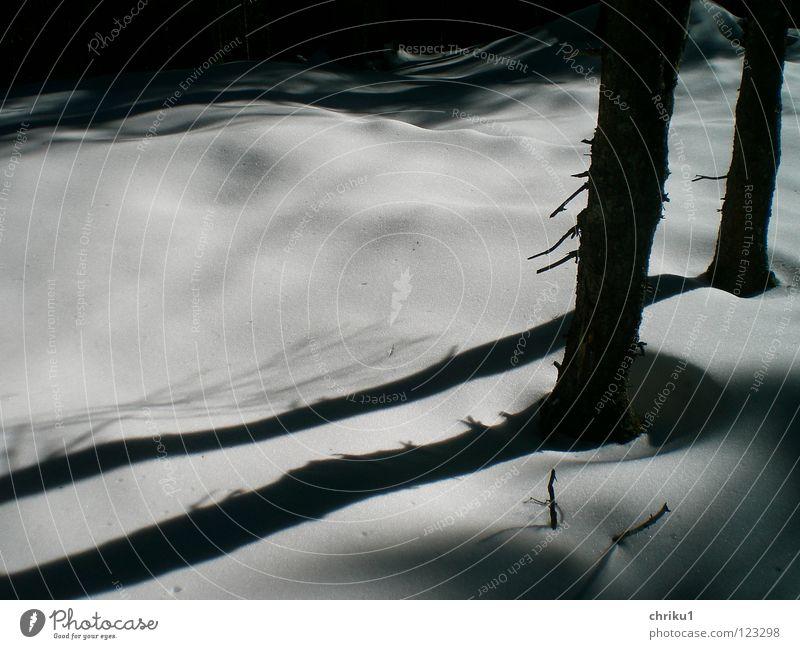 fast schwarz weiß.... wandern Bergsteigen Schneelandschaft Wald Baum ruhig Baumstamm Schneedecke Außenaufnahme Winter Schatten weiche Formen
