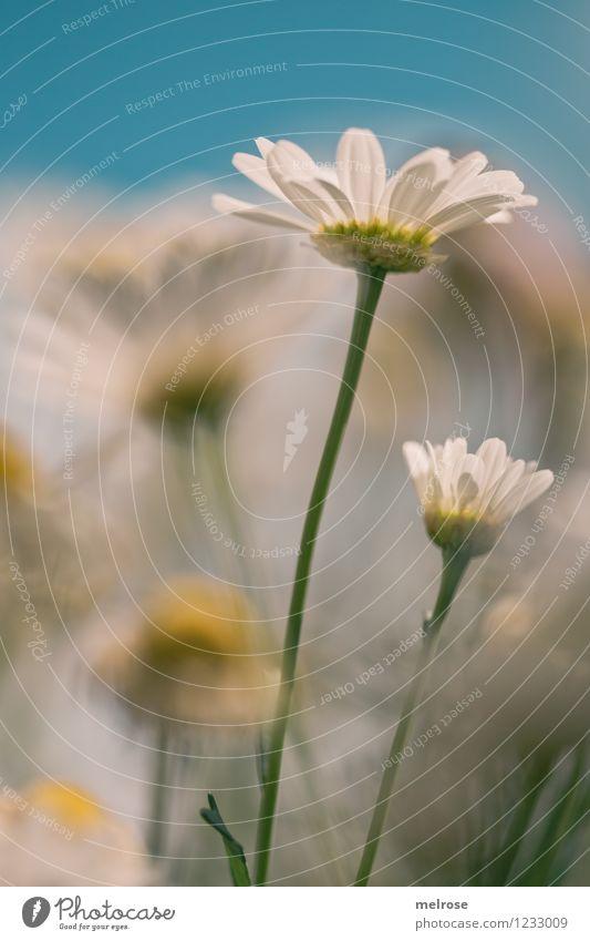 GUATA MORGA ... Himmel Natur blau Pflanze schön grün Sommer weiß Erholung Blume gelb Blüte Stil Garten Design leuchten