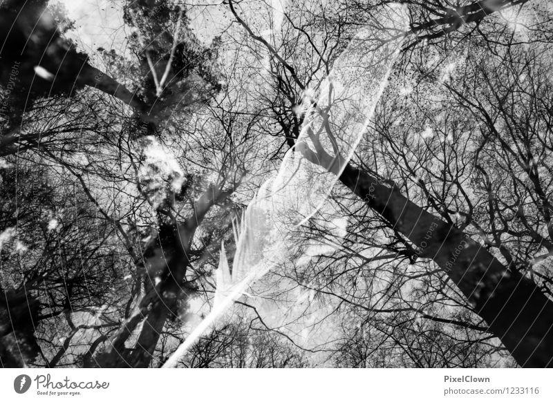 Blick gen Himmel Natur Ferien & Urlaub & Reisen Pflanze weiß Baum Landschaft Blatt dunkel Wald schwarz Stil außergewöhnlich Lifestyle Stimmung Kunst