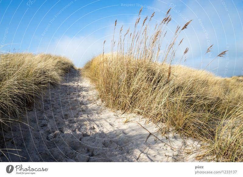 Sehnsucht Himmel Natur Ferien & Urlaub & Reisen Pflanze Sommer Sonne Erholung Meer Landschaft Strand Umwelt Gras Küste Wege & Pfade Freiheit Sand
