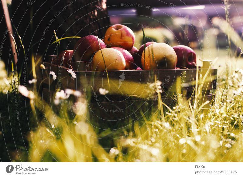 Frische Äpfel aus der Kiste Lebensmittel Frucht Apfel Ernährung Picknick Bioprodukte Vegetarische Ernährung Gesunde Ernährung Umwelt Natur Erde Sonnenlicht