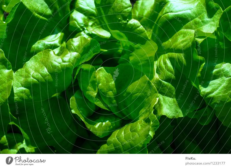 frisches grün Lebensmittel Salat Salatbeilage Ernährung Bioprodukte Vegetarische Ernährung Diät Natur Pflanze Blatt Gesundheit lecker Vegane Ernährung