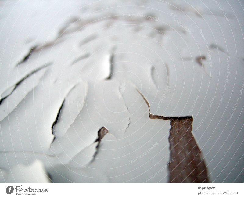 lack abblättern Rost weiß Holz Vergänglichkeit Lack alt korrodiert Detailaufnahme