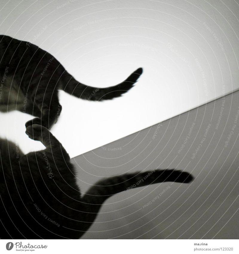Spieglein Spieglein...3 dunkel Katze hell gehen Spiegel Fell Säugetier Pfote Schwanz Spiegelbild Hauskatze schleichen
