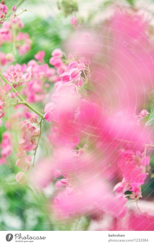 durch die rosarote brille Natur Pflanze grün schön Sommer Blatt Frühling Blüte Herbst Wachstum Blühend Schönes Wetter Kitsch