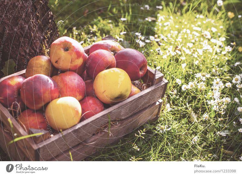 Bio, Bioer, am Biosten Lebensmittel Frucht Apfel Picknick Bioprodukte Vegetarische Ernährung Natur Pflanze Sonnenlicht Herbst Gras frisch Gesundheit lecker gelb