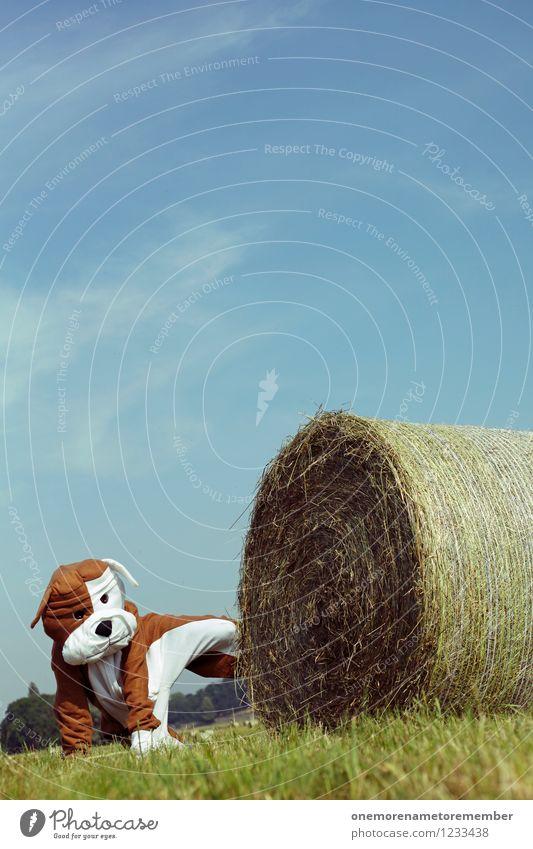 Look Away III Hund Freude lustig Kunst ästhetisch Haustier Kunstwerk Kostüm Karnevalskostüm Trieb spaßig Unsinn urinieren Spaßvogel Strohballen Heuballen