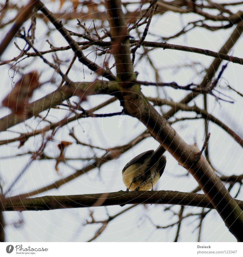 Schau mir in die Augen... Vogel Luft gefiedert Schnabel schwarz dunkel braun Tier Baum Sträucher Blatt Baumkrone Himmel fliegen Feder Schönes Wetter blau Natur