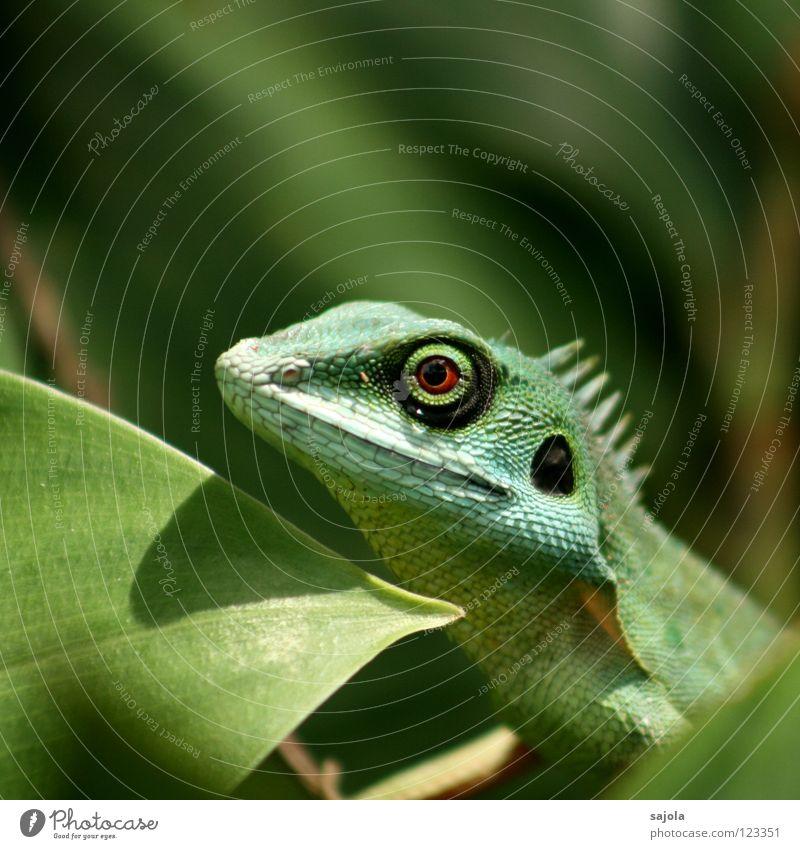 agame grün Tier Blatt Auge warten Kreis Wandel & Veränderung beobachten Tiergesicht lang Asien Urwald exotisch Reptil Tarnung Echsen