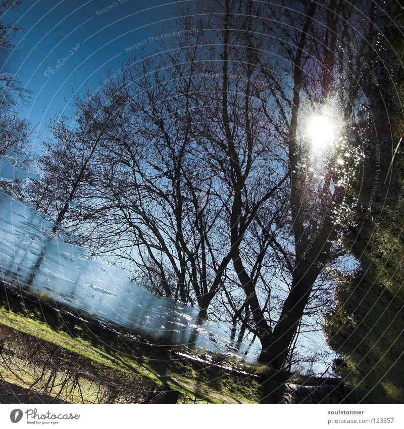 Sonnenspiegel Baum Spiegel See Frühling Winter kalt nass Ekel Reflexion & Spiegelung braun Quadrat Himmel Gegenlicht Sonnenlicht Sonnenspiegelung Sonnenstrahlen