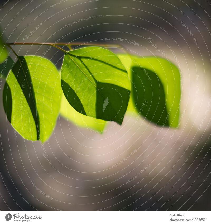 Blattwerk Umwelt Natur Pflanze Frühling Sommer Schönes Wetter Grünpflanze Nutzpflanze Wildpflanze braun grün Umweltverschmutzung Umweltschutz Wachstum Blattgrün