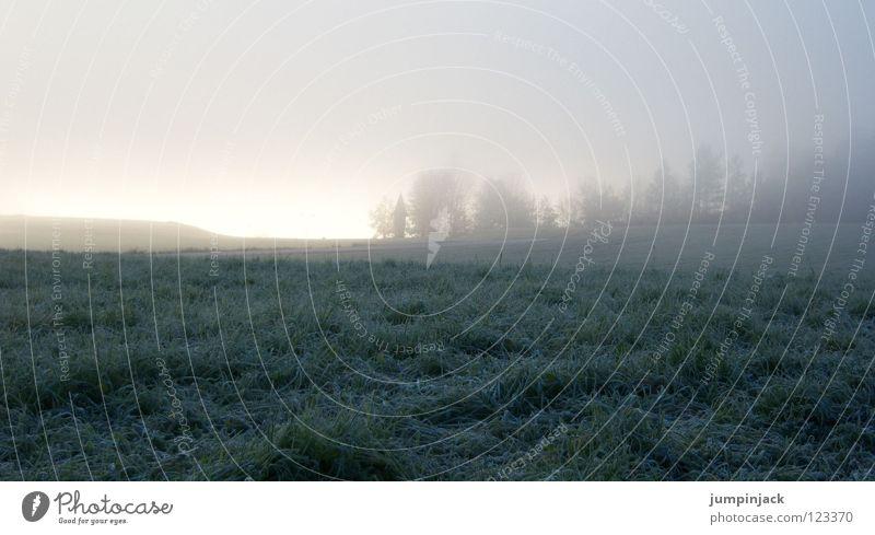 gloomy sunday Nebel Wiese grau Winter Herbst kalt Raureif Panorama (Aussicht) unheimlich dunkel Wolken Unendlichkeit Einsamkeit Trauer Silhouette bleich blau