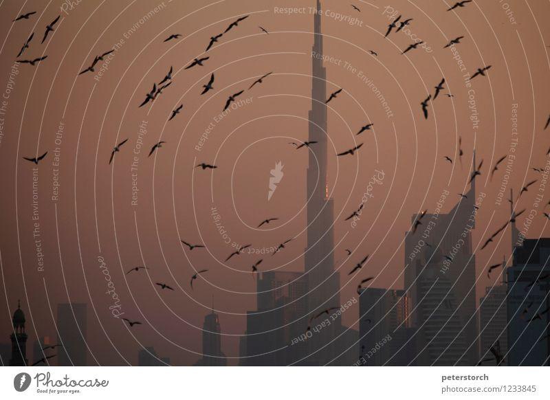 der Burj Khalifa im Abendlicht Ferien & Urlaub & Reisen Tourismus Ferne Städtereise Himmel Sonnenlicht Dubai Skyline Hochhaus Wahrzeichen Wildtier Möwenvögel