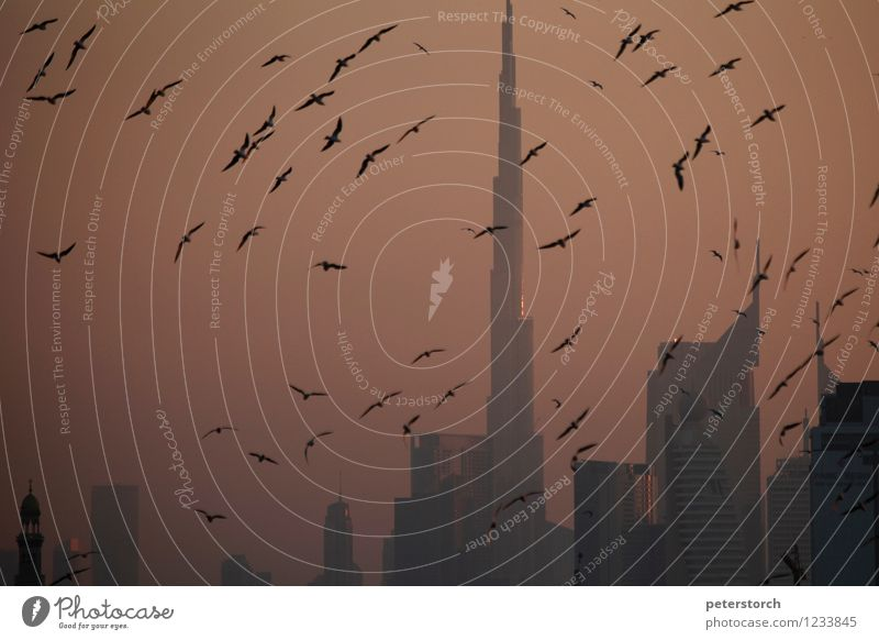der Burj Khalifa im Abendlicht Himmel Ferien & Urlaub & Reisen Ferne Gefühle Bewegung Stimmung Tourismus Wildtier Hochhaus Perspektive ästhetisch hoch
