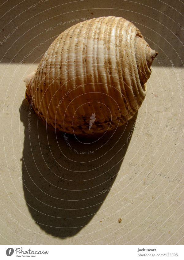 Schattenwurf Tier Wärme Stein Zeit liegen Dekoration & Verzierung Dinge Kreis rund Sicherheit Schutz fest Schalen & Schüsseln Erinnerung Spirale