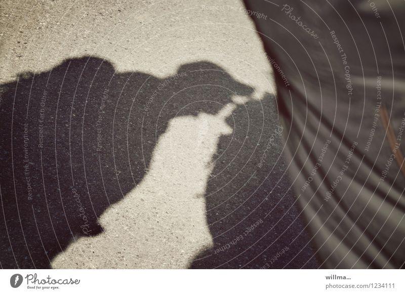 Sommerflirt Paar Küssen Gefühle Sympathie Liebe Verliebtheit Begierde Lust Schattenspiel Flirten Intimität Außenaufnahme Licht Silhouette