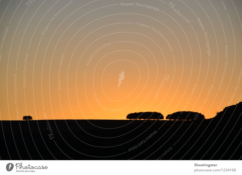 Psalm 92,13-16 Himmel Natur schön Farbe Baum rot Landschaft Einsamkeit orange Zufriedenheit Wachstum ästhetisch Kraft Hoffnung Trauer Ziel