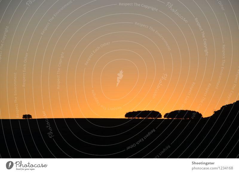 Psalm 92,13-16 Natur Landschaft Himmel Sonnenaufgang Sonnenuntergang Baum schön orange rot Wahrheit Ehrlichkeit Weisheit standhaft Reinheit Hoffnung Glaube