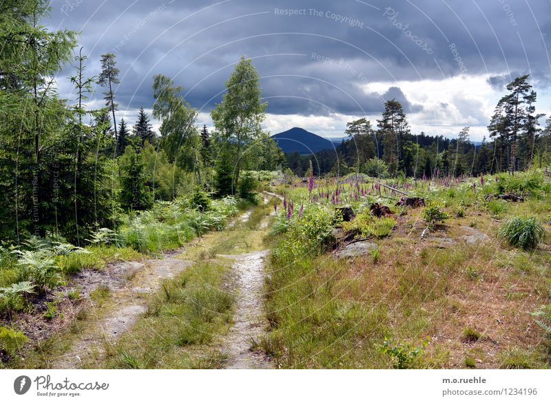 bohemia I like you Himmel Natur Ferien & Urlaub & Reisen Pflanze Sommer Sonne Baum Landschaft Wolken Ferne Wald Umwelt Berge u. Gebirge Leben Gefühle Gras