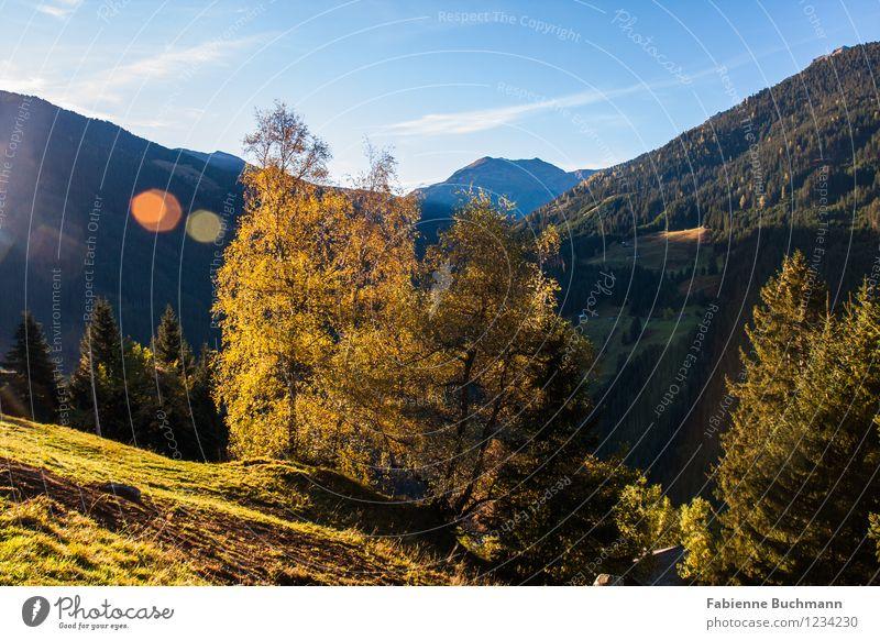 Herbstsonne Natur Landschaft Pflanze Himmel Sonne Sonnenlicht Schönes Wetter Baum Gras Hügel Alpen Berge u. Gebirge Ferne Karwendelgebirge Bergwald Berghang