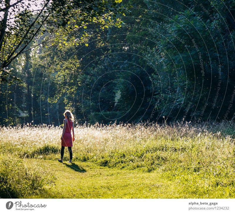 fairyland Mensch Natur Jugendliche Pflanze Sommer Junge Frau Sonne Baum Erholung ruhig Ferne 18-30 Jahre Wald Erwachsene Leben Wiese