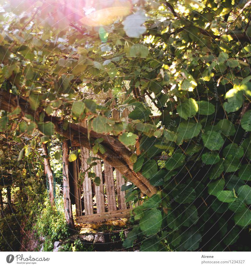 verheißungsvoll Schönes Wetter Sträucher Garten gartentür Gartentor Holztür Zaun Gartenzaun kalt natürlich braun grün Neugier Hoffnung Erholung geheimnisvoll
