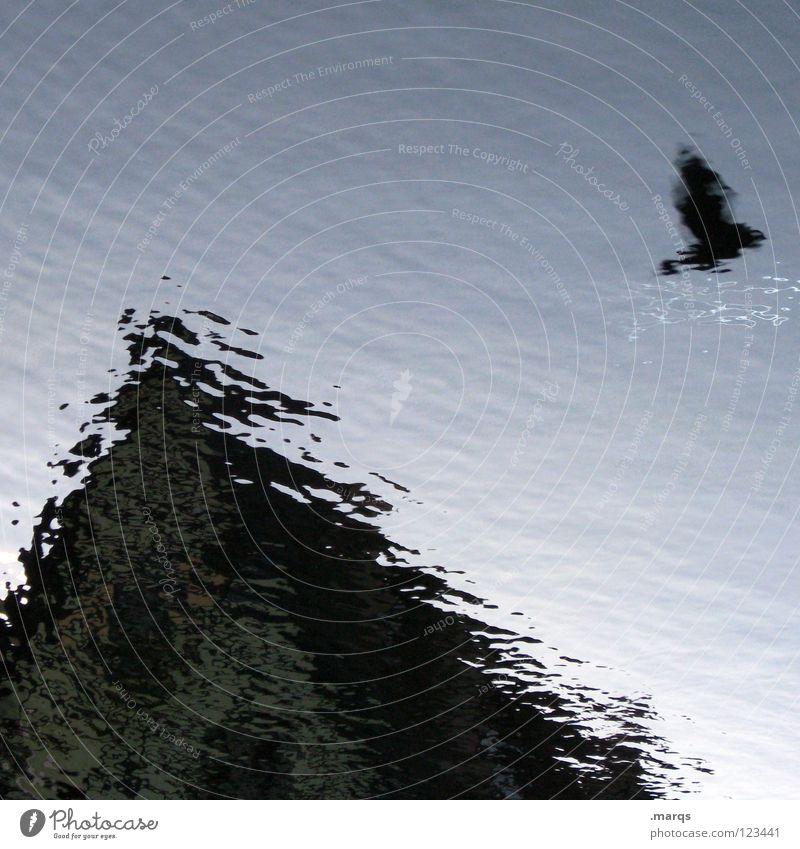 von Vögeln und Pfützen Wasser Haus Vogel Wellen Architektur fliegen Dach obskur Taube Pfütze Gewässer Dachgiebel