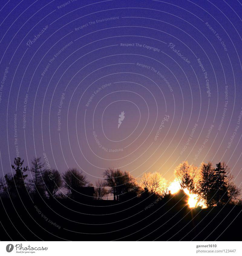 Sonnenfeuer Himmel Baum blau Winter schwarz Ferne kalt Brand gold Horizont Feuer Aussicht Himmelskörper & Weltall Sonnenaufgang