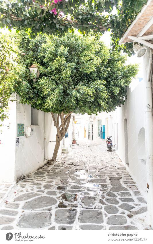 typisch kykladisch Ferien & Urlaub & Reisen Sommer Sommerurlaub Baum Paros Griechenland Dorf Kleinstadt Altstadt Menschenleer Mauer Wand Kleinmotorrad hell