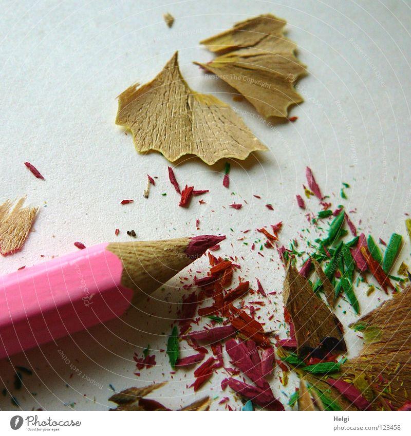 angespitzter Buntstift liegt mit den Abfällen auf einem hellen Untergrund Anspitzer Schreibstift Farbstift Holz Gesichtsausdruck mehrfarbig Müll lang dünn rosa