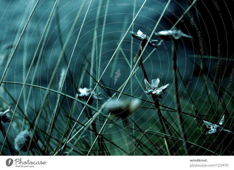 Twilight Meer Blume grün blau Strand ruhig kalt Traurigkeit Dämmerung Küste Wind frisch Wachstum Wildtier Schilfrohr wehen