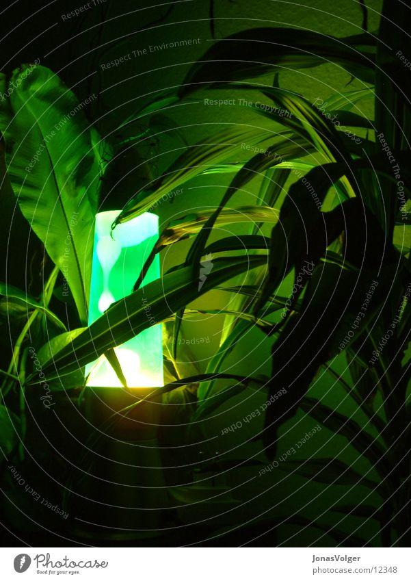 Grüne Lava im Dickicht grün Pflanze dunkel Häusliches Leben Lavalampe