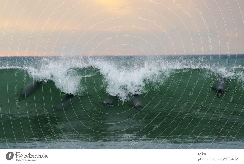 DANCE OF THE DOLPHINS Wasser weiß Meer grün blau Tier springen Spielen Wellen klein hoch Tiergruppe Schwimmen & Baden viele Säugetier Wal