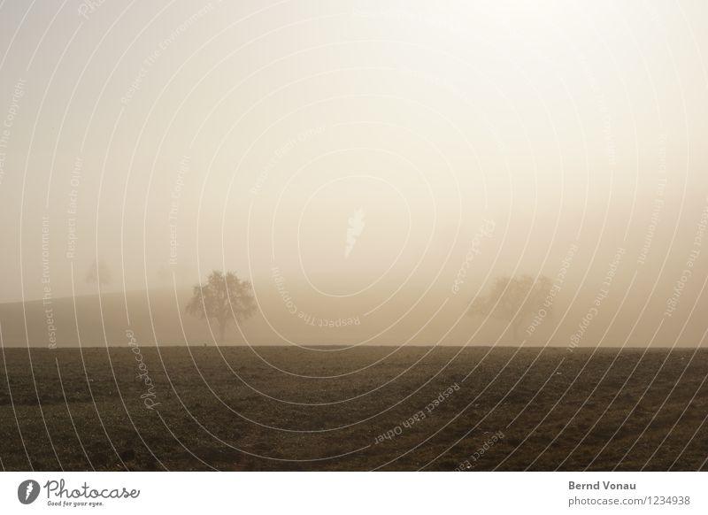 Moinsen Natur Pflanze Baum Landschaft Umwelt Wärme Leben Gefühle Gras Glück Stimmung Horizont Feld Nebel Dunst grell